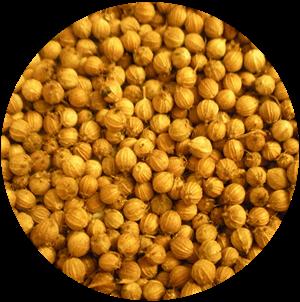 Coriander Seeds ( Dhaniya )